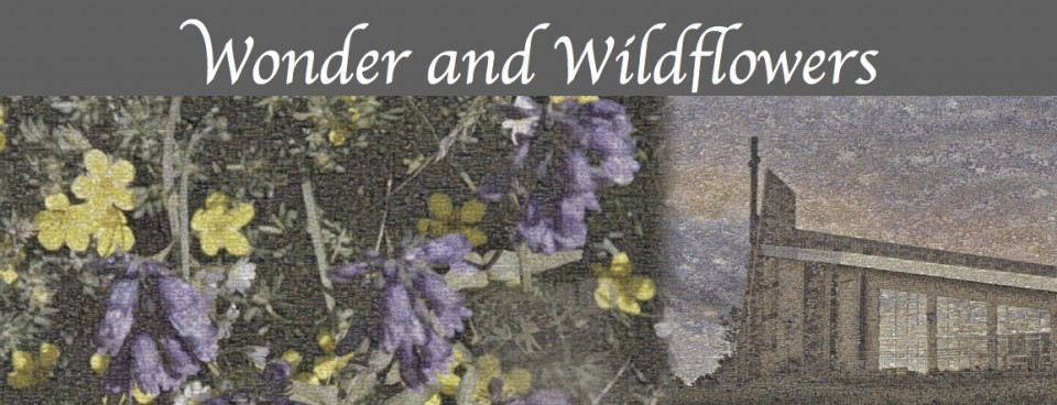 Wonder and Wildflowers